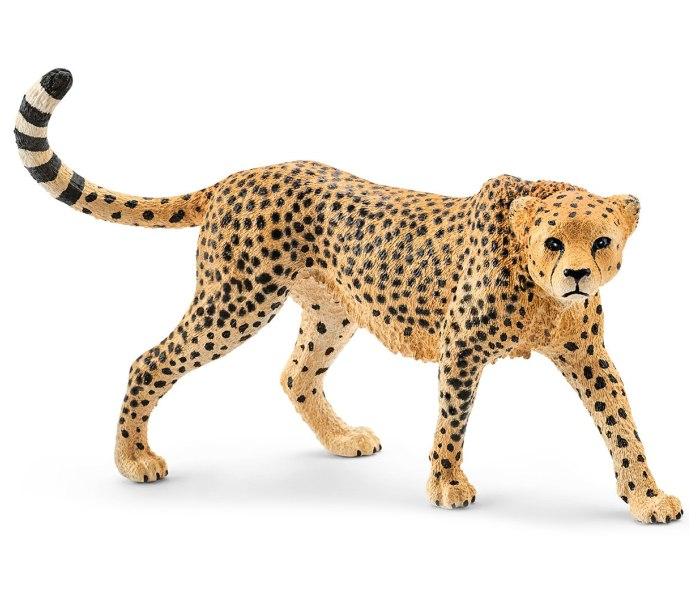 Gepard zenka