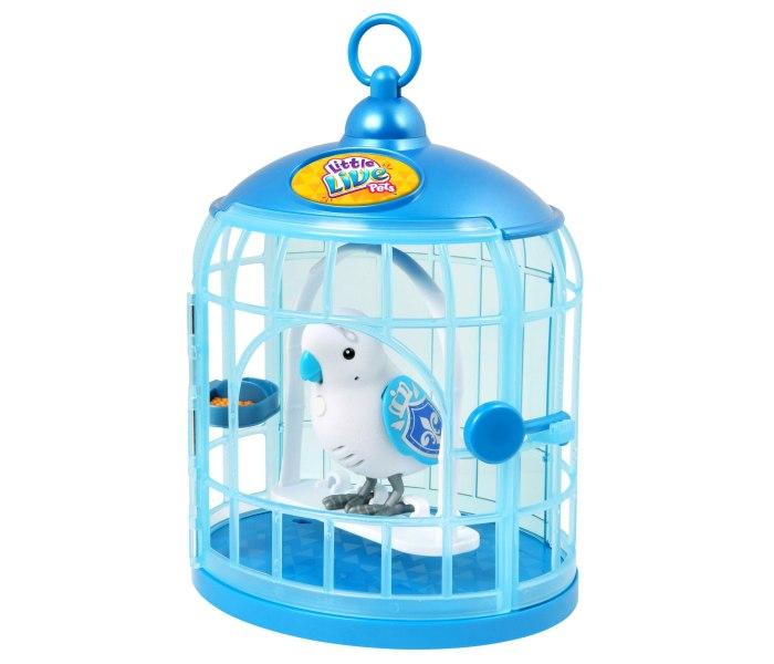 Papagaj u kavezu s4